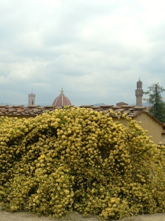 Flores com vista para a cupula do Duomo de Firenze