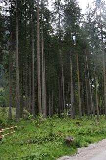 Bosque na trilha